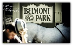 Belmont Park (EASY GOER) Tags: horses horse ny sports racetrack race canon track competition racing event 7d athletes sporting thoroughbred equine thoroughbreds belmontpark
