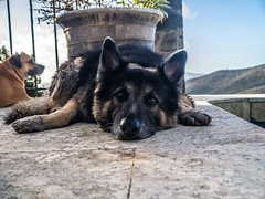 "Max chillin by the pool • <a style=""font-size:0.8em;"" href=""http://www.flickr.com/photos/91306238@N04/14574916825/"" target=""_blank"">View on Flickr</a>"