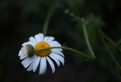 IMG_5138 (Nikulin's Photography) Tags: eosm canoneosm efm22mm