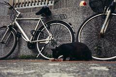 friends on the street <<Black>> (Xiun.Lee) Tags: pet cats pets animal cat kitten feline sony taiwan kitty gato neko taipei 台灣 台北 猫 貓 고양이 sonydscrx100mii 金硐