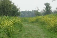 DSC06421 (Ton Smilde) Tags: oostvaardersplassen naturereserveinthenetherlands