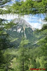 IMG_9794 (Pfluegl) Tags: wallpaper berg ngc christian alpen dachstein steiermark hintergrund pfluegl ramsau rötelstein höchster kalkalpen öberösterreich pflügl
