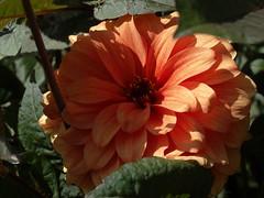 (AbAberson) Tags: summer garden zomer tuin