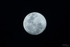 DSC02810 (Martin Flemig) Tags: moon nature mond natur kamera malediven nex7 helengeliislandresort