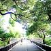 Sunshine filtering through foliage / 木漏れ日