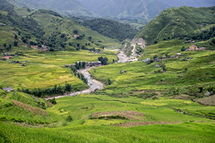 Ruộng bậc thang Sapa (Anh Dang ^_^) Tags: wild vacation west green tourism nature field zeiss rural canon landscape 50mm prime countryside is high focus rice natural terrace getaway hill north tourist resort vietnam highland step carl m42 fields fixed rest mf cz manual agriculture 50 sapa attractions laocai 6d 24105 terraced wheretogo