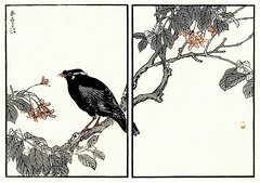 Rangoon creeper and common hill myna (Japanese Flower and Bird Art) Tags: flower bird art japan japanese book hill picture creeper common woodblock nihonga rangoon religiosa myna indica kono combretaceae sturnidae gracula quisqualis readercollection bairei