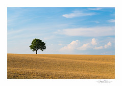 Summer Landscape (George-Edwards) Tags: uk light sunset shadow summer england sky sun tree nature field clouds rural landscape golden evening countryside corn nikon wheat country farming harvest minimal single crop lone wiltshire rolling isolated lonelytree georgeedwards