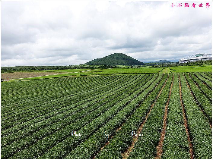 濟州島innisfree館 綠茶博物館 (70).JPG