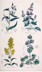 Anglų lietuvių žodynas. Žodis lithospermum officinale reiškia <li>lithospermum officinale</li> lietuviškai.