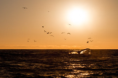 Whale Watching in Monterey (Tom Reville) Tags: california usa america monterey whale humpback
