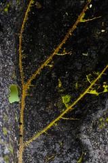 backside (szllva) Tags: autumn abstract leave nature leaf vein
