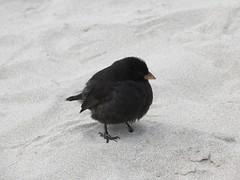 Galapagos - San Cristobal-176
