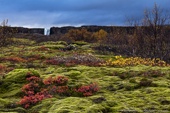 Autumn in Thingvellir - National Park in Iceland (Arnar Bergur) Tags: autumn trees red green fall nature water clouds landscape waterfall iceland moss colorful raining thingvellir þingvellir arnarbergur