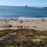 "Elephant Seal Vista Point <a style=""margin-left:10px; font-size:0.8em;"" href=""http://www.flickr.com/photos/127467040@N04/15382478401/"" target=""_blank"">@flickr</a>"