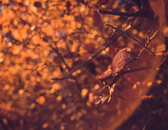 Urban Ruska (trm42) Tags: dof autumn flare foliage wideangle finland leaf syksy streetlamp helsinki suomi blazing leaves goodmorning legacy ruska bokeh sonya7ii olympus om28mmf2 moody fall