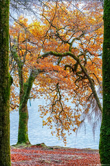 Fall Colors on Loch Oich #4 (Matt Anderson Photography) Tags: 2017 landscape mattandersonphotography scotland uk unitedkingdom hoarfrost magical color nopeople river garry loch oich invergarry december winter lush nature frost frosted fragility ethereal woodland tree outdoors paranormal mystery fantasy tranquilscene fog sunrisedawn coldtemperature scenics traveldestinations autumn idyllic meadow ephemeral emergence majestic ruralscene beautyinnature beechtree moss root perthshire theend lochoich fallcolors madison wisconsin usa