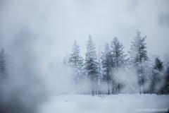 IMG_2258 (F@bione©) Tags: lapponia lapland marzo 2017 husky aurora boreale northenlight circolo polare artico rovagnemi finalndia finland