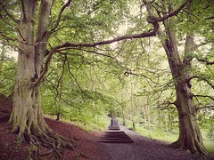 Between the trees (pepemczolz) Tags: park trees sculpture nature forest outdoors yorkshire bretton
