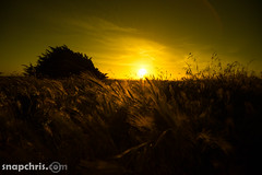 Sunset in the grass (tibchris) Tags: california sunset sky yellow landscape gold golden coast mendocino greass snapchris