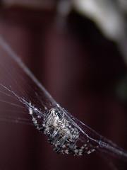 DSC08863 (Soul199991) Tags: spider sony dscf828