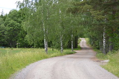 Knutsbo, Grytns (David A's Photos) Tags: road june rural point sweden farm fields birch vanishing dalarna forests 2014 grytns knutsbo