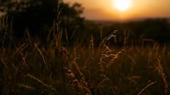 Sunset field (Andreas verland) Tags: leica travel sunset m wrzburg