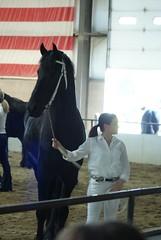 DSC01336 (jmbedel) Tags: ohio horses horse springfield horseshow 2014 friesian cessnastables buckeyebaroque