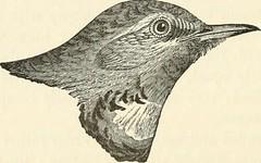 Anglų lietuvių žodynas. Žodis genus phoenicurus reiškia genties phoenicurus lietuviškai.