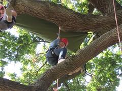 Tree Climbing! (Goodleaf Tree Climbing) Tags: treeclimbing goodleaftreeclimbing isleofwightactivities