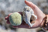 Shells in hand (kaifr) Tags: norway strand day sommer artic skjell vannøya