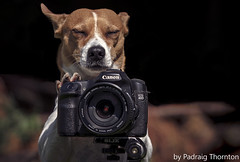 The pro ! (padraig thornton) Tags: camera ireland portrait dog pet canon eos paw colorful tripod pebbles 7d thornton padraig ef70200mm cannine 40d 1755mm28 pfjthorntongmailcom