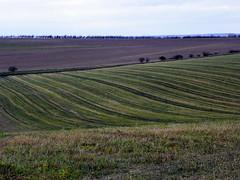 GOC Ashwell 075: Fields