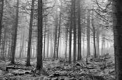 South Barrule (13) (cj_iom) Tags: blackandwhite mist nature canon walking photography walks scenic glen isleofman manx iom southbarrule ellanvannin canon1100d manxnationalglen manannanmaclirscloak manxbroth