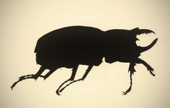 Rhinoceros Beetle (ahpook12) Tags: nature bug insect experimental contemporary fineart photogram rayograph toner rhinocerosbeetle goliathbeetle michaelmendez