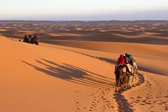 2014-02-19b Early morning camel train in Erg Chebbi, Morocco (Pondspider) Tags: sahara sand desert dunes dune morocco camels ergchebbi cameltrain anneroberts annecattrell pondspider