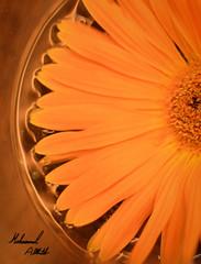 Flower (Mohammed-2014) Tags: orange flower me follow flicker