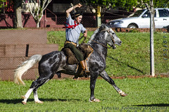Cavalos Crioulo (Venicius Follmann de Oliveira) Tags: ngc riograndedosul gaucho missões matoqueimado cavalocrioulo abccc tirodelaço caibaté veniciusfollmanndeoliveira