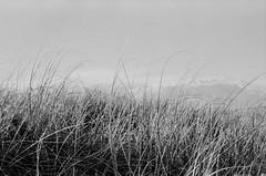 Noll (benjiman04) Tags: ocean blackandwhite film nikon moody australia queensland epson analogue asa100 goldcoast filmphotography nikonfm extol shd100 lucky100 epsonv500 filmshooters believeinfilm
