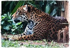 Image37 - Copia (Daniel.N.Jr) Tags: animal selvagem zoologico kodakz990