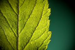 Unorthodox route (ANVRecife) Tags: macro green canon leaf bokeh path trail jungle 7d concept monday pathway unorthodox vallejos creativephoto creativeconcept conceptphotos macromondays anvrecife it'sajungleoutthere