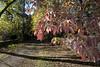 Fall Dogwoods (virginia.arboretum) Tags: flower landscape florida scenic arboretum dogwood boyce cornus virginiastatetree