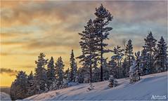 Northern Winter, Sweden (AdelheidS photography) Tags: adelheidsphotography adelheidsmitt adelheidspictures snow sunset scandinavia sweden sverige scenery schweden lappland lapland pines winter