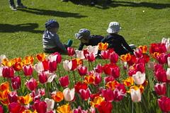_DSC0742 (Riccardo Q.) Tags: parcosegurtàtulipani places parco altreparolechiave fiori tulipani segurtà