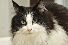 Squeeky - 9 year old spayed female