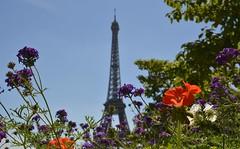 Summer Eiffel Tower
