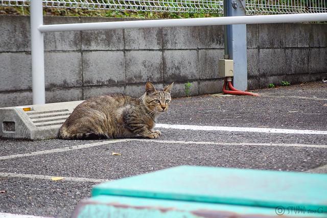Today's Cat@2014-06-29