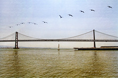 into the mystic (1crzqbn) Tags: bridge seascape pelicans sailboat 11 7d baybridge  hss happyfathersday pier14 ferryplazasf