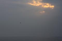 3 (  / Yorozuna) Tags: light cloud sunlight lake birds japan shrine     shiga   cloudiness biwako    takashima lakebiwa cloudyweather       shirahigeshrine newyear2014 2014