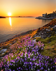 A early morning. (High five o/) Tags: ocean flowers sea orange sun seascape nature colors norway sunrise landscape norge nikon nikkor risr d600 1635f4